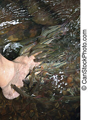 fish spa - Fish spa in the real nature at the waterfall.