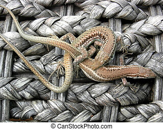 lizard rope - Two lizards clinging on plaited mats made from...