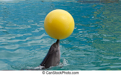 Dolphin show cute head in clear blue water pool friendly...
