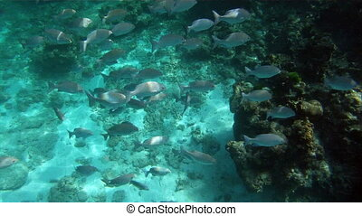 school of tropical fishes