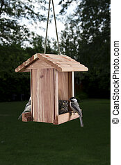 Bird feeder wirror - two Black-capped Chickadee facing...