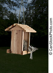 Landing on a bird feeder