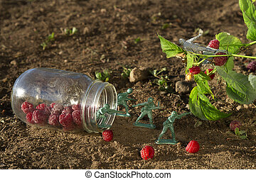 Protect the raspberry - four green toy soldier protecting a...