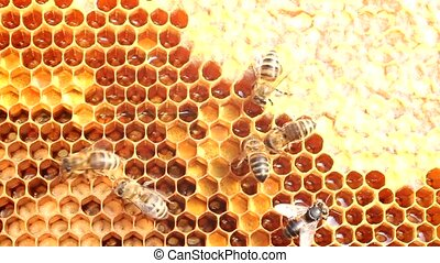 Bees are protected from attack - Fall in bee hives penetrate...