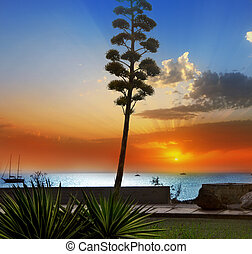 Amadores in Gran Canaria Canary islands - Amadores agave...