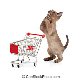 Admiring kitten or cat with shopping cart