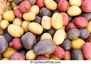 Colorful fresh potatoes on display - Fresh colorful potatoes...