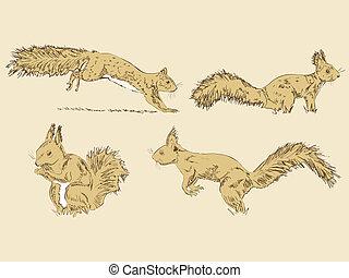 Squirrel - Vector hand drawn squirrel set