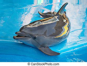 dauphin, piscine