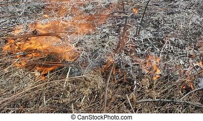 Fire of grass
