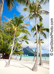 Bora Bora beach - Beautiful beach with a view of Otemanu...
