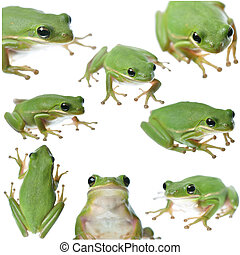 Green Frog Collage - Collection of various poses of a green...