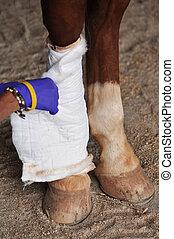 caballo, pierna, lesión, tratamiento