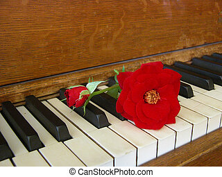 Rose & Antique Piano 1 - A red rose is displayed upon the...