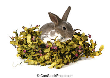 Adorable Bunny in Foilage on White Background - Grey Easter...