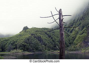 acores; lagoa das patos on flores island - small lake,...