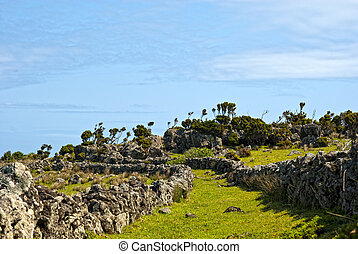 acores; coast trail on flores island - small path beside he...