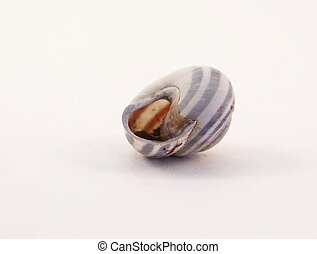 Upsidedown Sunbleached Snail Shell - Image of a single empty...
