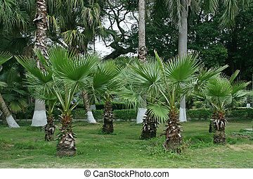 palmetto - a kind of plant named palmetto