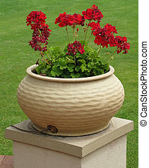Pot With Red Flowers - Garden flowerpot with red flowers;...