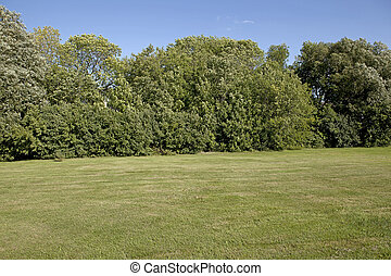 Backyard lawn surrounded with trees