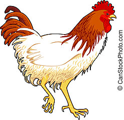 Chicken - vector illustration of a chicken