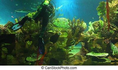 diver in oceanarium