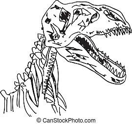 Bosquejo, Dinosaurio, fósil, vector,...