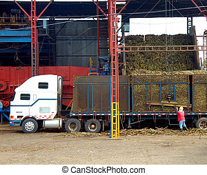 Costa Rican Sugar Cane Mill - Large semi loads chopped sugar...