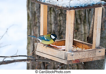 Titmouse at the feeder in a winter park - Titmouse at the...