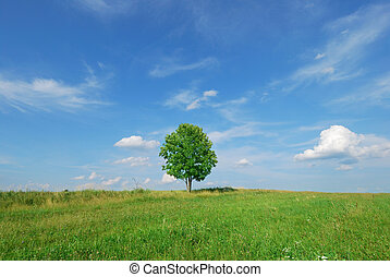 Summer landscape - green field and lonely tree