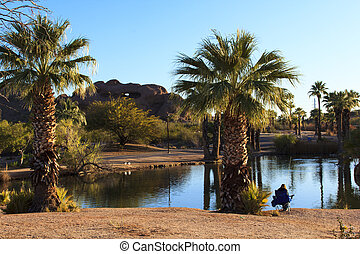 Papago Park - Tropical plants around a small pond at Papago...