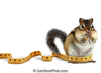 Fat chipmunk with measuring tape, diet concept