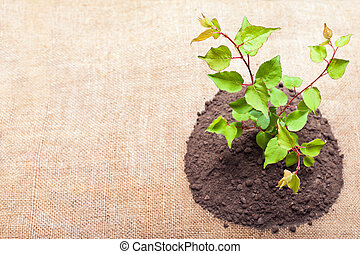 Young green plant is growing out of ground