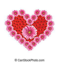 Heart from gerbera flowers isolated on white background. Valentine's Day