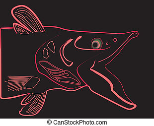 Salmon line drawing illustration, isolated on black...