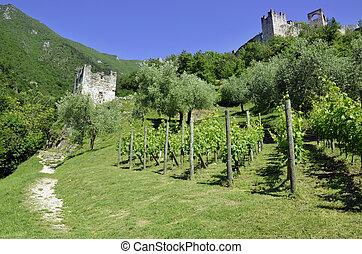 Scenic on fresh vineyards under deep blue sky