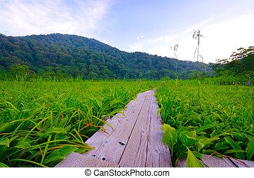 Tanashiro Marshland, Shirakami Sanchi World Heritage, Japan.