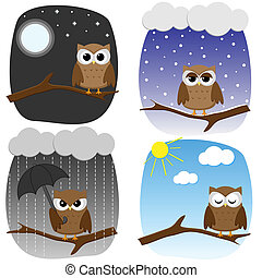 Four owls on branches in different weather and in different...