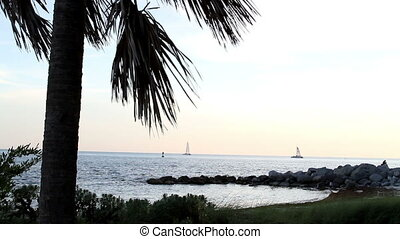 Shore View Key West Florida - Shore View Boats and Palm Tree...