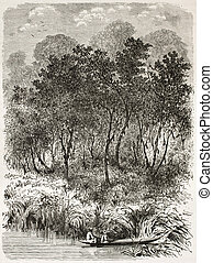 Theobroma cacao wild trees old illustration, Brazil Created...