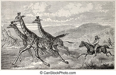 Giraffe hunting - British explorer sir Samule Baker huntin...