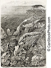 Seaweeds old illustration. By unidentified author, published...