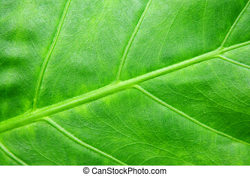 Green tropical leaf background - Botanical abstract...
