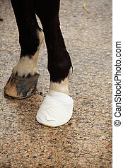 bandage on a horse hoof