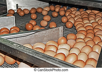 Blocking the highway eggs - Egg collection point before...