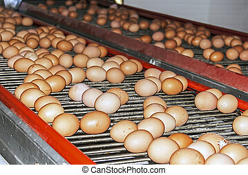 Road eggs - Conveyor belts for transporting eggs