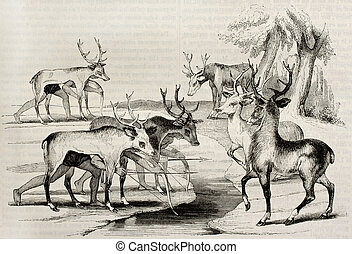 Hunting deers - Native Americans camouflage hunting deers in...