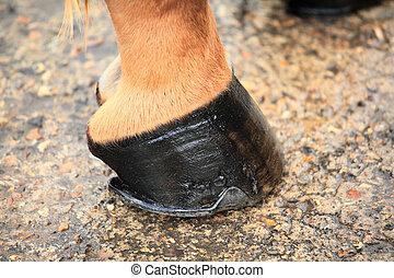 caballo, pezuña