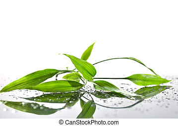 Spa Background with Bamboo and Water